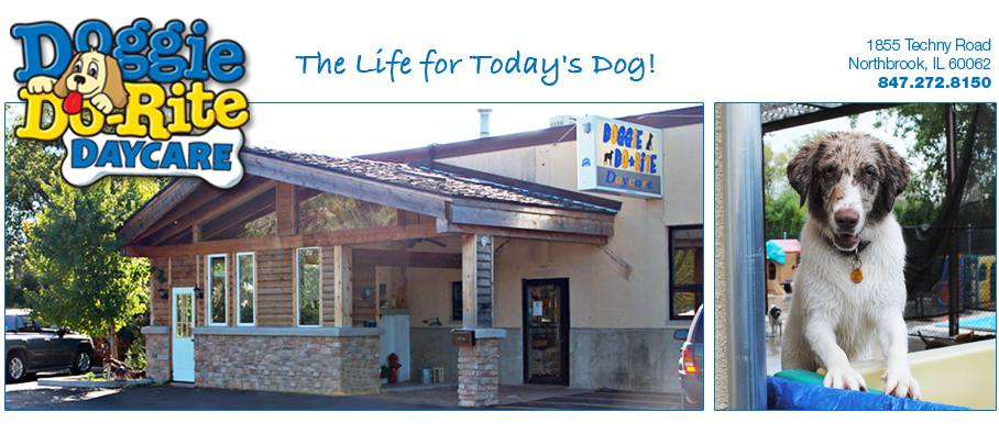 About Doggie Do-Rite Daycare