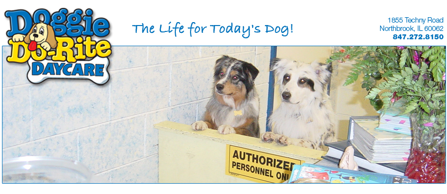 Doggie Do-Rite Daycare | Registration